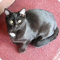 Adopt A Pet :: Cayenne - Fairbury, NE