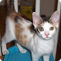 Adopt A Pet :: Almond - Richmond, VA