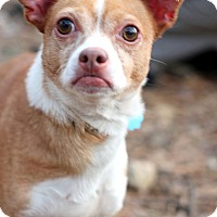 Adopt A Pet :: Mac - Tinton Falls, NJ