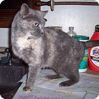 Adopt A Pet :: Nephrititi (Titi) - Delmont, PA