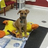 Adopt A Pet :: Mikee - Longs, SC