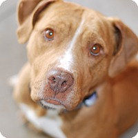 Adopt A Pet :: Buttercup - Buffalo, WY