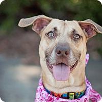 Adopt A Pet :: Samantha - Kingwood, TX