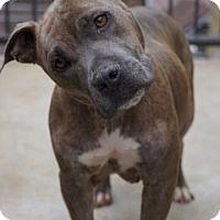 Adopt A Pet :: Tinsel - Carteret/Eatontown, NJ