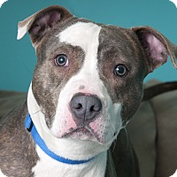 Adopt A Pet :: Walter - Chicago, IL