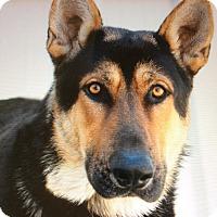 Adopt A Pet :: BUCK VON BURGDORF - Los Angeles, CA
