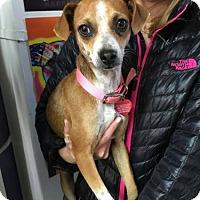 Adopt A Pet :: Daytona - San Francisco, CA