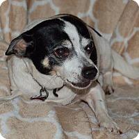 Adopt A Pet :: Melody - geneva, FL