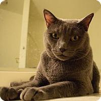 Adopt A Pet :: Smokey - Phoenix, AZ