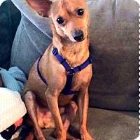 Adopt A Pet :: Biscuit - Plant City, FL