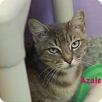 Adopt A Pet :: Azalea - Baton Rouge, LA