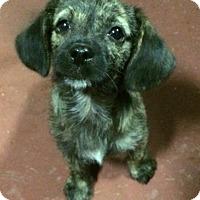 Adopt A Pet :: Ember - Fort Atkinson, WI
