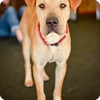 Adopt A Pet :: Becki - Indianapolis, IN