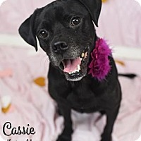 Adopt A Pet :: Cassie (Lonely Heart) - Gulfport, MS