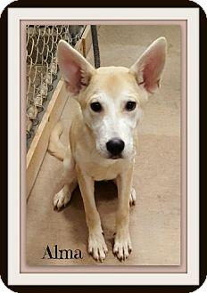 Carolina Dog Mix Puppy for adoption in Tombstone, Arizona - Alma