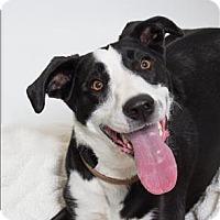 Adopt A Pet :: Mc - San Luis Obispo, CA