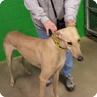 Adopt A Pet :: Rupert WV C - Knoxville, TN