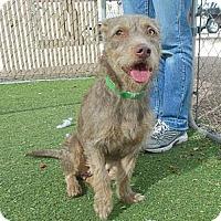 Adopt A Pet :: Hana - Phoenix, AZ