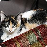 Adopt A Pet :: Kendall - Farmingdale, NY