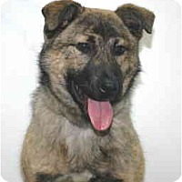 Adopt A Pet :: Trapper - Port Washington, NY