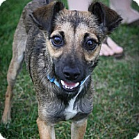 Adopt A Pet :: Kiowa - Broomfield, CO