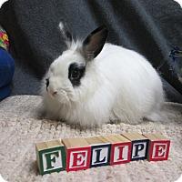 Adopt A Pet :: Felipe - Newport, DE