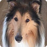Adopt A Pet :: Pilgrim - Pueblo West, CO