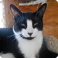 Adopt A Pet :: Hermione - Richland, MI