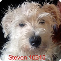 Adopt A Pet :: Steven - baltimore, MD