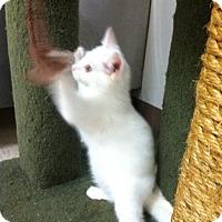 Adopt A Pet :: Noodle - Trevose, PA