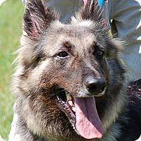 Adopt A Pet :: Rosie - Preston, CT