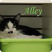Adopt A Pet :: Alley - Winter Haven, FL