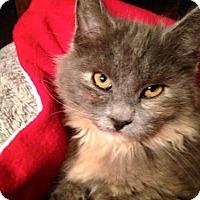 Adopt A Pet :: Sadie Rose - Ephrata, PA