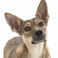 Adopt A Pet :: Sheela - San Diego, CA