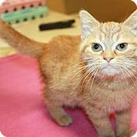 Adopt A Pet :: Mishka - Sparta, NJ