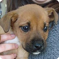 Adopt A Pet :: Michaelangelo - Erwin, TN