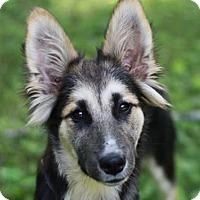 Adopt A Pet :: Gypsey - Bedminster, NJ