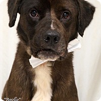 Adopt A Pet :: Apollo - Newnan City, GA