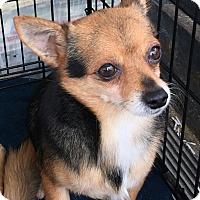 Adopt A Pet :: Bandit - Mount Pleasant, SC