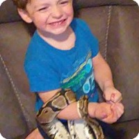 Snake for adoption in Warwick, Rhode Island - Ekans