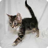 Adopt A Pet :: Fuzzy - Bradenton, FL