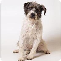 Adopt A Pet :: Doggo - Columbus, OH
