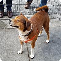 Shepherd (Unknown Type) Mix Dog for adoption in San Francisco, California - Maximo