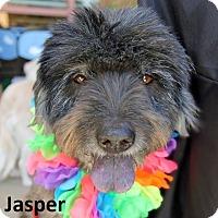 Adopt A Pet :: Jasper - Lake Forest, CA