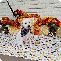 Adopt A Pet :: FALCOR - Phoenix, AZ
