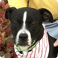Adopt A Pet :: Bo - Evansville, IN