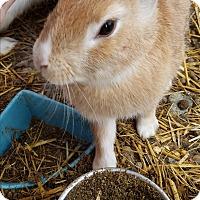 Adopt A Pet :: Hopper - La Jolla, CA