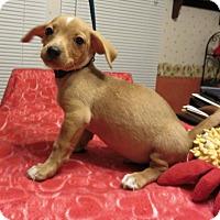 Adopt A Pet :: Russ - Harrisonburg, VA