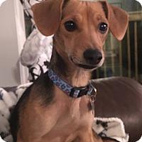 Adopt A Pet :: Beth - Harrisonburg, VA