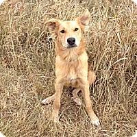 Adopt A Pet :: Timmy - Saskatoon, SK